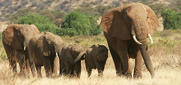 WILDLIFE SAFARIS PACKAGES