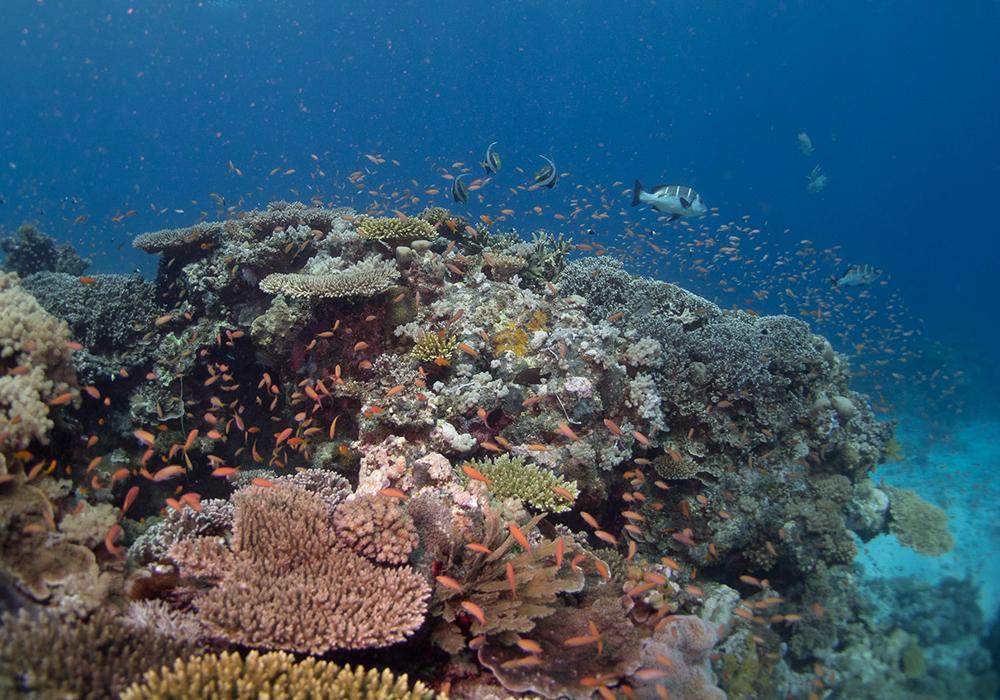 POPO ISLAND CORAL SITE