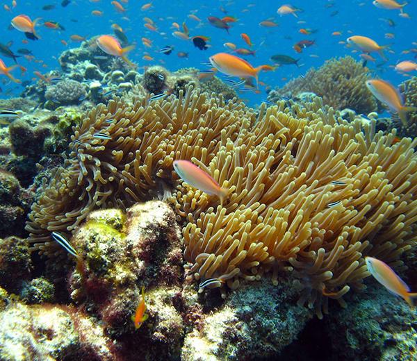 Ras Kiwakani Coral Site - Zanzibar-Coral-Sites
